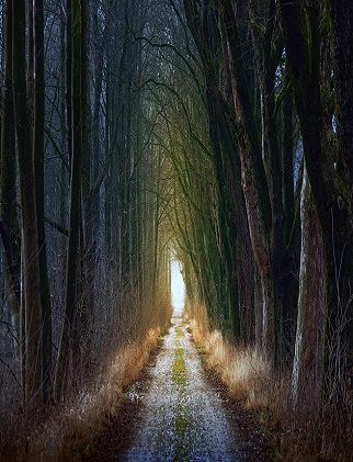 Tree Pathway - TMH feature